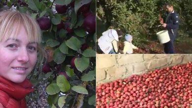 Photo of foto | #EroinaSăptămânii. Împarte vitamine în toată Moldova. O profesoară din Ungheni a dăruit zeci de kilograme de mere din livada sa