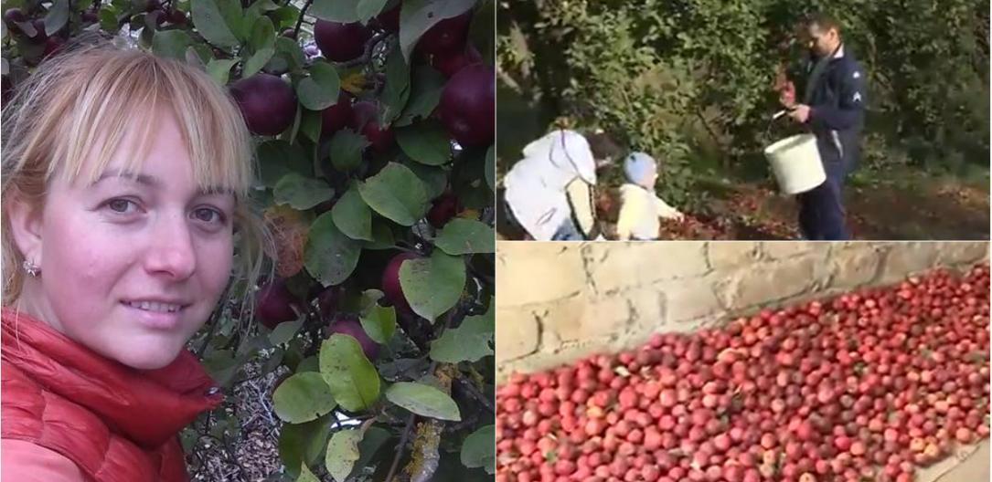 Photo of foto   #EroinaSăptămânii. Împarte vitamine în toată Moldova. O profesoară din Ungheni a dăruit zeci de kilograme de mere din livada sa