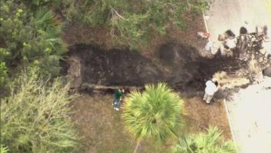 Photo of video   Mister într-o pădure din Florida. Către ce duce un tunel și ce au descoperit polițiștii în acesta?