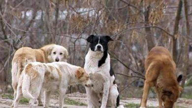 Photo of foto | Caz înfricoșător la Bălți. O femeie a fost atacată de o haită de câini vagabonzi