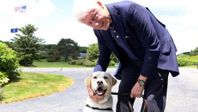 """Photo of Câinele lui George Bush are o nouă slujbă. Sully """"a depus jurământul de credință"""" unui centru militar"""