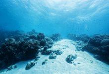 Photo of Remediul contra COVID-19 ar putea exista pe fundul oceanelor. O nouă teorie dă speranțe pentru tratamentul oricărei pandemii viitoare