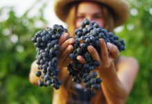 """Photo of """"La Moldova acasă"""", fructele-s mai gustoase. Susține producătorii țării noastre la un târg cu delicii autohtone"""