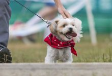 Photo of Își vor plimba câinii doar cu botnițe și lese. Ce alte reguli li s-ar putea impune locuitorilor din Cahul?