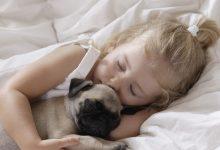 Photo of În loc de tort, un pat și o pernă. Astăzi este sărbătorităZiua Mondială a Somnului: 13 curiozități pe care probabil nu le-ai știut până acum