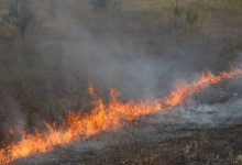 Photo of video | Incendiu de proporții la ieșirea din Strășeni. Ard zeci de metri pătrați de vegetație