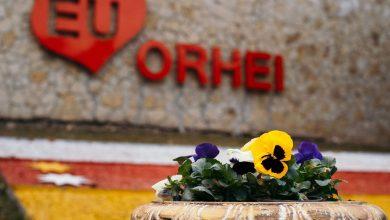 """Photo of foto   Orhei """"a înflorit""""! Mii de plante multicolore, apărute pe străzile orașului, bucură locuitorii și oaspeții municipiului"""