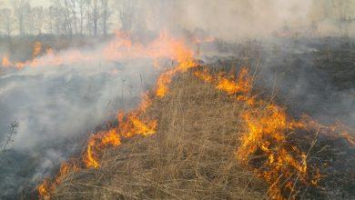 Photo of Pompierii continuă să lupte cu incendiile de vegetație. Peste 130 de hectare de teren din întreaga țară au ars în ultimele 24 de ore