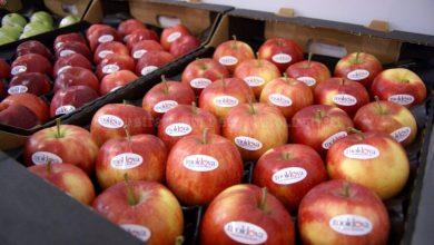 Photo of O nouă dramă pentru agricultorii moldoveni: Încă un lot cu peste 20 de tone de mere, reținut de vameșii ruși