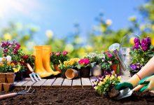 Photo of Cum să alegi semințele de flori pentru a cultiva cele mai spectaculoase plante decorative?