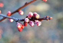 Photo of Iarna nu se dă bătută nici în aprilie. Meteorologii au emis Cod Galben de îngheț pentru următoarele două zile