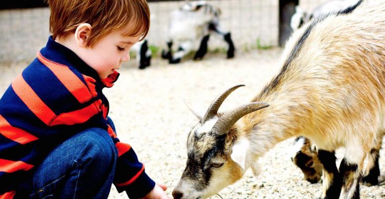 Photo of Premieră la Grădina Zoologică din Chișinău. Oaspeții vor putea să hrănească animalele și să se joace cu ele într-o curte special amenajată