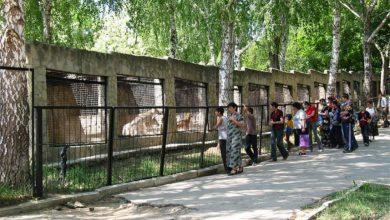Photo of Schimbări de program și prețuri la Grădina Zoologică. Cât costă acum biletele și până când poți vizita animalele?