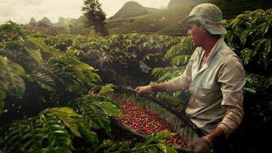 Photo of Prețul cafelei va sări în aer? Producătorii nu ar mai face față comenzilor