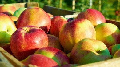 Photo of Vulnerabilitatea Republicii Moldova: Dependența de 99% de Rusia la exportul de mere, în condițiile unei concurențe crescânde