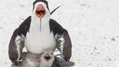 Photo of foto | Imagine dezolantă, surprinsă de o fotografă americană. Cu ce își hrănea o pasăre puișorul?