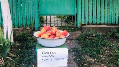 """Photo of foto   O familie din Moldova și-a impresionat vecinii, dăruind piersici """"pentru copiii cuminți"""""""