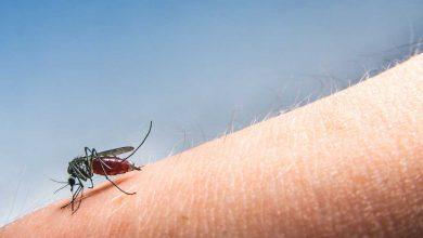 Photo of ANSP atenționează: Virusul West Nile, prezent în mai multe țări europene