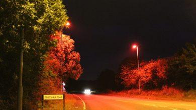 Photo of Liliecii, ajutați să traverseze șoselele în siguranță: Mai multe becuri LED pritenoase cu mamiferele au fost instalate în Marea Britanie
