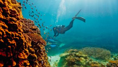 Photo of Natura, în stare critică din cauza poluării: Marea Barieră de Corali din Australia este amenințată