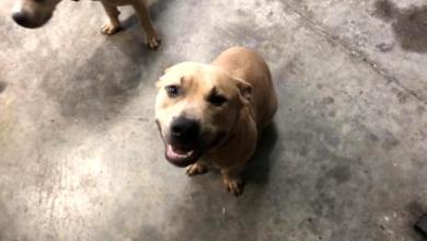 Photo of foto | Și-a dat viața pentru a salva doi copii: Un câine a murit după ce a încercat să-și protejeze prietenii de un șarpe veninos