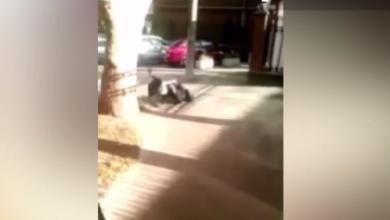 Photo of video   Și-au împărțit pumni și picioare, s-au tras de păr, iar mai apoi s-ar fi împăcat. Două eleve din capitală s-au bătut chiar la liceu