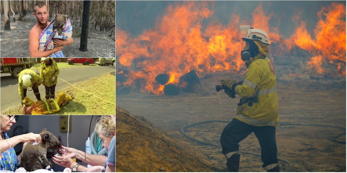 Photo of foto | Adevărații eroi ai Australiei: Pompierii luptă necontenit, un tânăr salvează zeci de koala, iar unele vedete fac donații