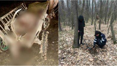 Photo of foto | Indivizii care ar fi împușcat un cerb nobil în rezervația Codrii au fost identificați. Ce pedeapsă riscă cei trei bărbați?
