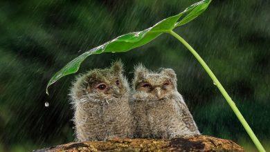 Photo of Pregătiți umbrelele și evitați să mergeți pe sub copaci. Avem Cod galben de averse și vijelie pe întreg teritoriul țării