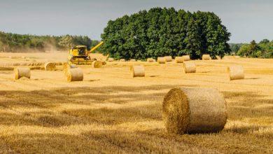 Photo of Au tras pe sfoară 33 de agricultori, obținând peste 6,7 milioane de lei