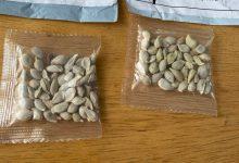 Photo of Mai mulți americani primesc pachete misterioase cu semințe din China. De ce nu trebuie să le planteze?