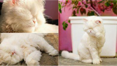 Photo of foto, video | Nu poate vedea, dar simte iubirea celor din jur. Istoria dramatică a unei pisici, care impresionează oamenii din întreaga lume