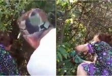 Photo of video | Momentul în care bebelușul abandonat într-o vie din Nisporeni este găsit. Martorii au fost nevoiți să taie tufișurile pentru a-l salva