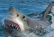 Photo of Un tânăr de 17 ani a fost ucis de un rechin în timp ce făcea surf. Este al cincilea atac mortal de la începutul anului, în Australia