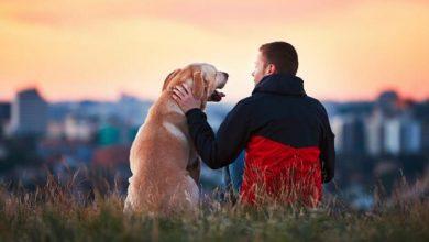 Photo of foto | Astăzi este Ziua Internațională a Câinelui. Șapte cărți și povești despre prietenii cu patru lăbuțe ai omului
