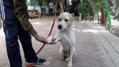 Photo of Doi veterinari români au plecat la Beirut. Medicii vor ajuta animalele care au suferit în timpul exploziilor devastatoare