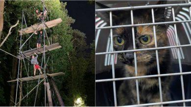 Photo of video | Au fost instalate schele pentru a o ajuta să coboare. Aventura unei pisici care a urcat într-un copac de 10 metri