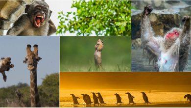 Photo of foto | Viața lor nu a fost schimbată de pandemie! Cele mai amuzante fotografii cu animale sălbatice, realizate în 2020