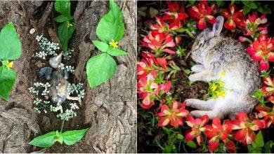 Photo of foto | Un hobby bizar, însă la care nu ar renunța vreodată. Modalitatea prin care o femeie onorează animalele moarte pe care le găsește