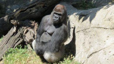 Photo of Caz dramatic la grădina zoologică din Madrid. O femeie se află în stare extrem de gravă după ce a fost atacată de maimuță