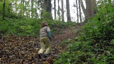 Photo of A mers să culeagă ciuperci și s-a făcut nevăzut. Un copil, căutat timp de mai multe ore într-o pădure din Șoldănești