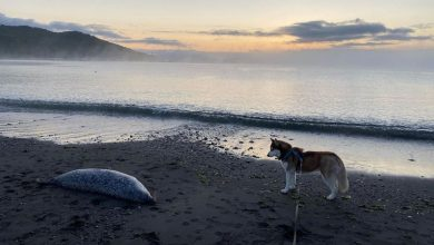 Photo of Algele toxice ar fi cauza deceselor în masă ale viețuitoarelor marine de pe coastele peninsulei Kamceatka