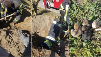 Photo of foto, video | Strigau de disperare și așteptau să fie salvați. Trei cățeluși de câteva săptămâni, îngropați de vii la Botanica