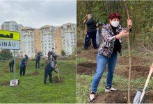 Photo of Orașul nostru a devenit mai verde! 12.000 de arbori, sădiți astăzi în toate sectoarele capitalei