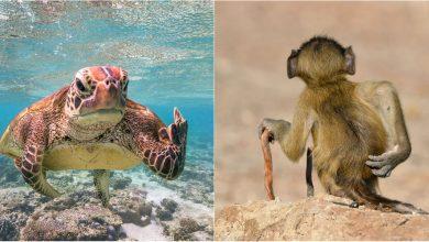 Photo of foto   Nu e Photoshop! Cele mai amuzante fotografii cu animale din 2020