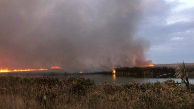 Photo of video | Circa 700 de hectare din Delta Dunării au fost cuprinse de flăcări. Pompierii luptă de câteva zile cu focul