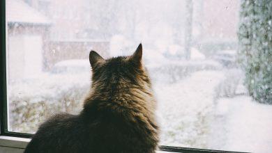 Photo of meteo   Iarna ne salută în weekend! Prognozele meteorologilor pentru următoarele zile