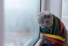 Photo of meteo | Pregătiți fularele și puloverele! Frigul va încerca să ne piște obrăjorii în această săptămână