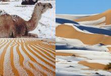 Photo of foto, video | Fulgii cad pe nisip, iar cămilele se plimbă prin zăpadă! Deșertul Sahara a fost cuprins de nea