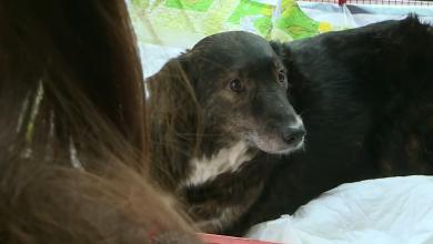 Photo of video | Câinele găsit în Chișinău cu labele mutilate a fost adoptat și are și cont de Instagram